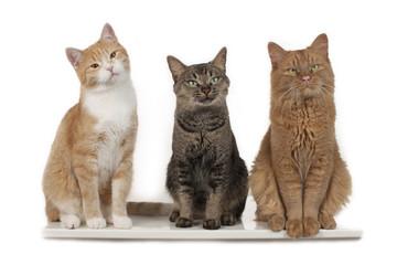 Drei Katzen nebeneinander - three cats side by side