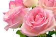Śliczne mokre róże