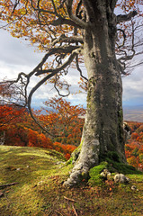 tree trunk in autumn