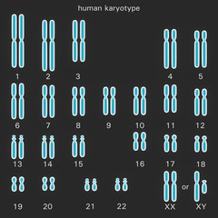 Normal human karyotype