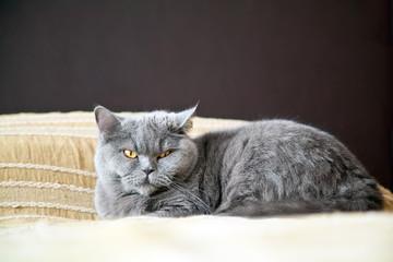 Beautiful Lying Cat
