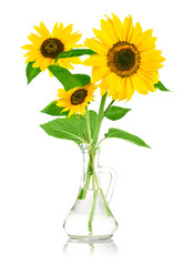bouquet flowers of sunflower in glass vase isolated on white