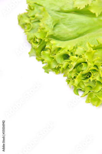 Lettuce Bunch
