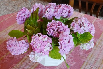 A vase with pink blooming hortensia flowers on a table