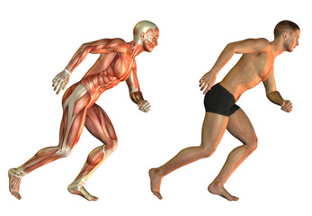 Anatomie Laufstudie Mann