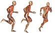 Muskel Laufstudie beim Mann