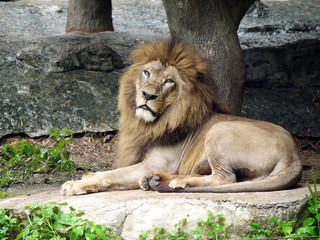 Lion pose through camera