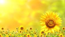 """Постер, картина, фотообои """"Sunflowers"""""""