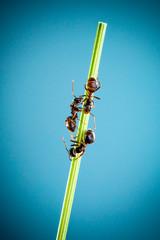 Three ants.