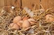 Leinwanddruck Bild - nest mit hühnereiern