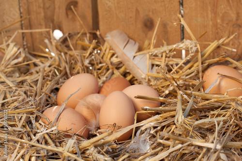 Leinwanddruck Bild nest mit hühnereiern