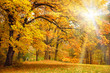 Gold Autumn with sunlight / Beautiful Trees in the forest