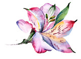 Watercolor Pink Lily