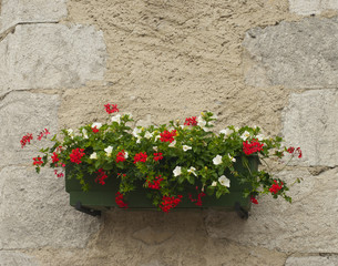 Flower box on a wall in France