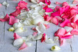 Rose petals in pink and white