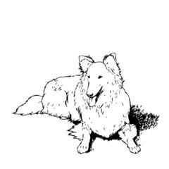Hund Vektor Silhouette