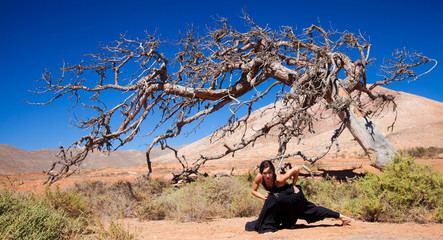 flamenco and a dead tree