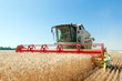 Combine harvests wheat on a field in sunny summer day - 55062576