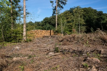 Area cleared of trees with log pile in the background