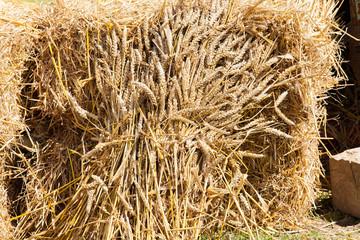 gerbe de blé moisson a l'ancienne