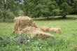 A haystack in the backyard