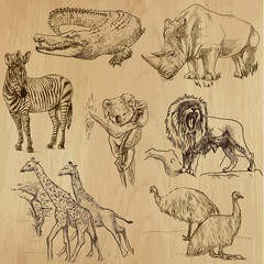 Animals around the World (part 2). Collection of hand drawings.