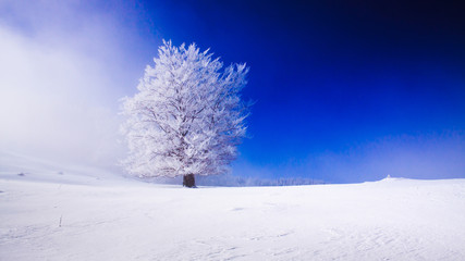 Beautyfull snowy landscape with snow covered tree