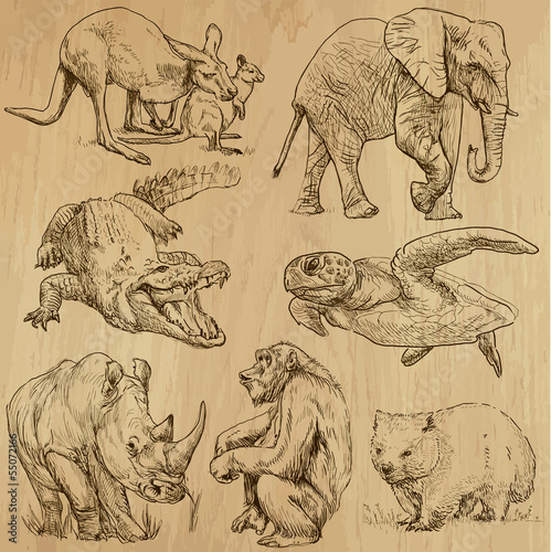 Animals around the World (part 1). Collection of hand drawings.