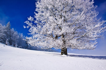 Snow covered tree with icy background and fog