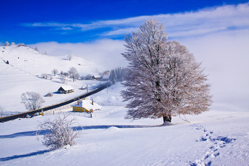 Beautifull winter rural landscape with snow covered trees and fo