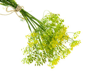 Fresh dill flowers, isolated on white