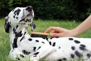 Hund genießt die Fellpflege mit Bürste draußen