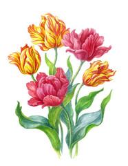 Тюльпаны на белом фоне, акварель.