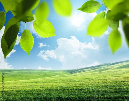 spring sunny background