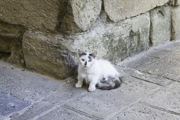 Cat abandoned