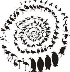 Waterfowl birds in a spiral
