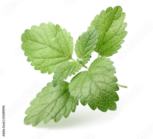 Leaves of melissa
