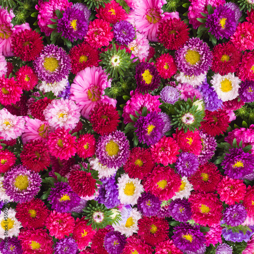Poster aster flowers background