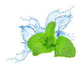 Mint leafs water splash