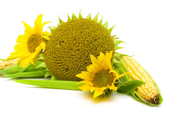 sunflowers and corn close up on a white background