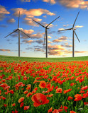 red poppy field with wind turbines in the sunset