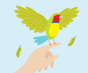 Lady Gouldian Finch Bird On Hand