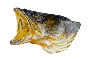 Head of predatory fish
