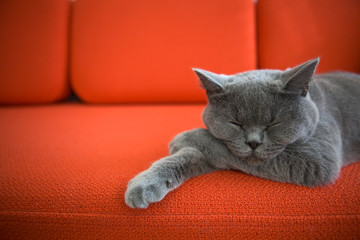 Cat relaxing on the couch.