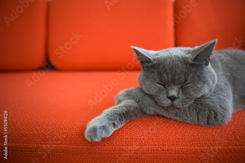 Foto op Plexiglas Kat Cat relaxing on the couch.