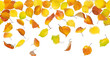 Seamless pattern of autumn leaves, falling on white background.