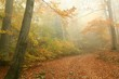 Path through autumn forest on a foggy October day