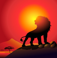 lion & sunset