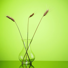 Wheat ears in glass vase isolated on green background