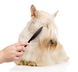 care for dog hair. isolated on white background